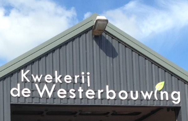 Westerbouwing_Thumb